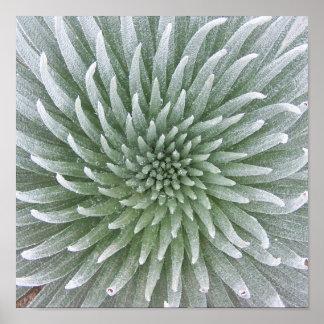Hawaiian Cactus Succulent Poster