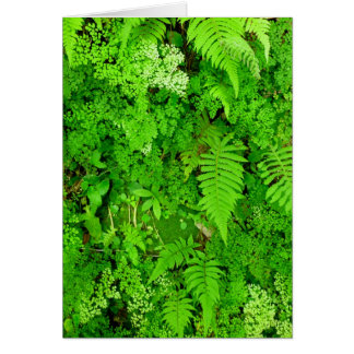 Hawaiian Ferns Card