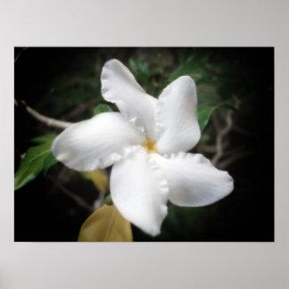 Hawaiian Flower 2 Poster