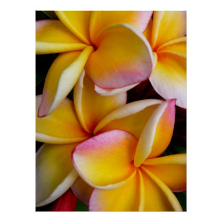 Hawaiian Frangipani Print