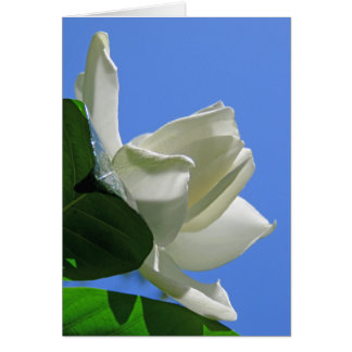 Hawaiian Gardenia Card