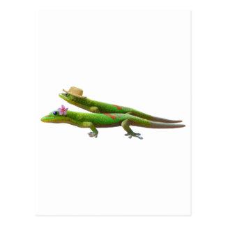 Hawaiian Geckos Postcard