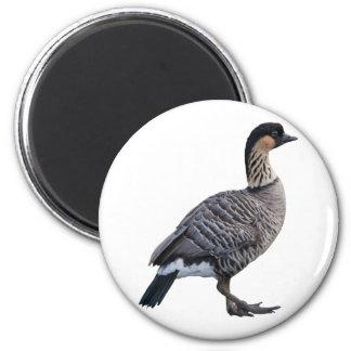 Hawaiian Goose (Nene) Magnet