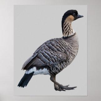 Hawaiian Goose Nene Print