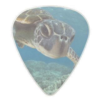 Hawaiian Green Sea Turtle Acetal Guitar Pick