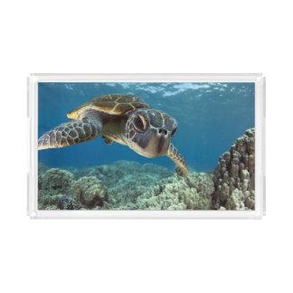 Hawaiian Green Sea Turtle Acrylic Tray