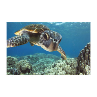Hawaiian Green Sea Turtle Canvas Print
