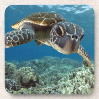 Hawaiian Green Sea Turtle Coaster