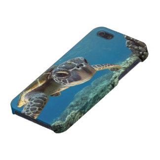 Hawaiian Green Sea Turtle iPhone 5/5S Case