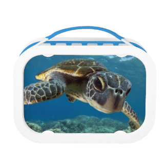 Hawaiian Green Sea Turtle Lunch Box