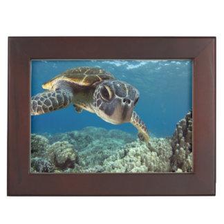 Hawaiian Green Sea Turtle Memory Box