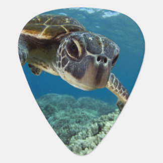 Hawaiian Green Sea Turtle Plectrum