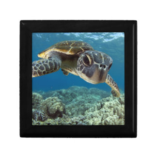 Hawaiian Green Sea Turtle Small Square Gift Box