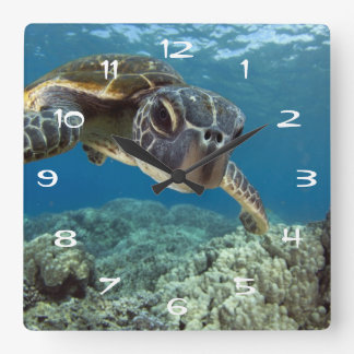 Hawaiian Green Sea Turtle Square Wall Clock