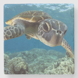 Hawaiian Green Sea Turtle Stone Beverage Coaster