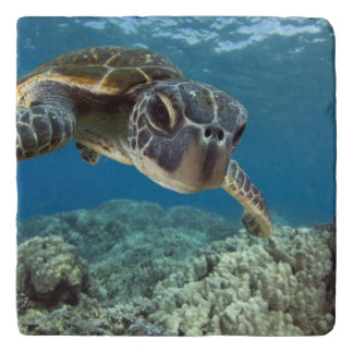 Hawaiian Green Sea Turtle Trivet