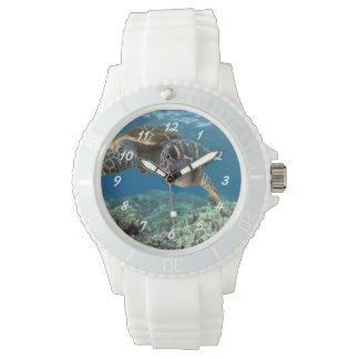 Hawaiian Green Sea Turtle Watch