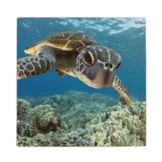 Hawaiian Green Sea Turtle Wood Coaster
