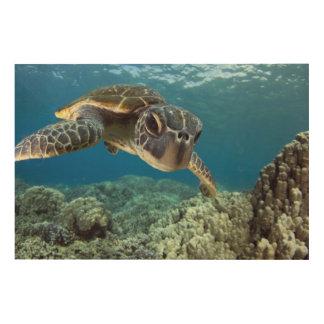 Hawaiian Green Sea Turtle Wood Print