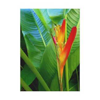 Hawaiian Heliconia Canvas Print