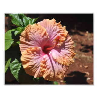Hawaiian Hibiscus Art Photo