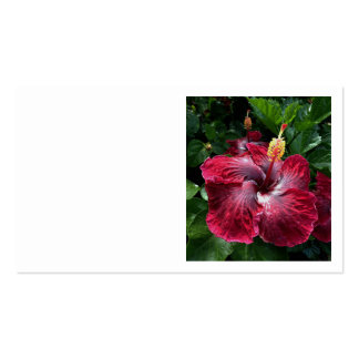 Hawaiian Hibiscus Pack Of Standard Business Cards