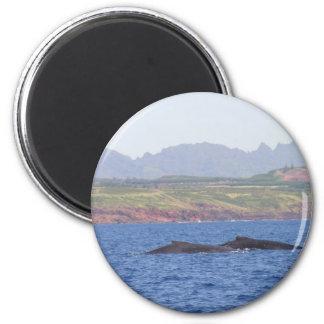 Hawaiian Humpback Whales Magnet