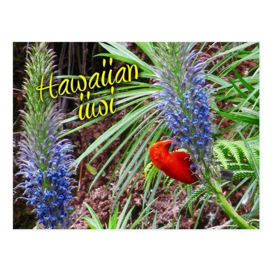 Hawaiian iiwi bird feeding on Lobelia grayana Postcard