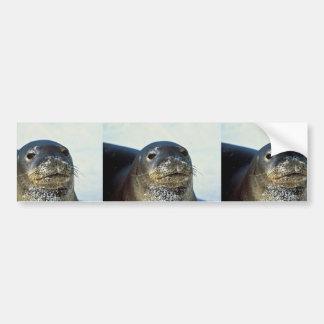 Hawaiian Monk Seal Bumper Sticker