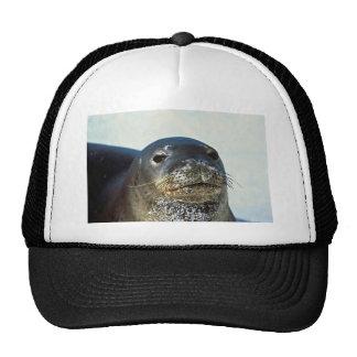 Hawaiian Monk Seal Cap