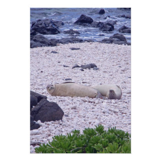 Hawaiian Monk Seal Poster