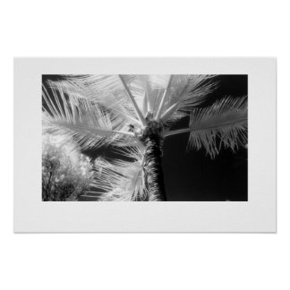 Hawaiian Palm Tree Poster