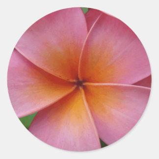 Hawaiian Pink Plumeria Frangipani Tropical Flower Classic Round Sticker
