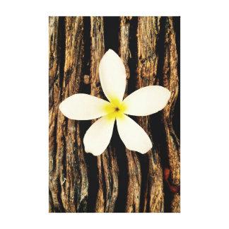 Hawaiian Plumeria Statement Piece Canvas Prints