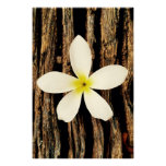 Hawaiian Plumeria Statement Piece Poster