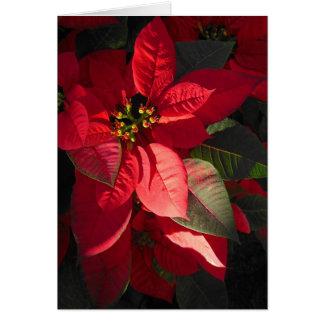 Hawaiian Poinsettia Card