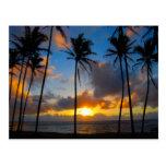 Hawaiian Sunrise Postcard