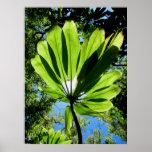 Hawaiian Ti Plant Poster