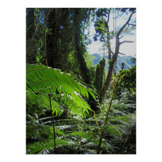 Hawaiian Tree Ferns Poster