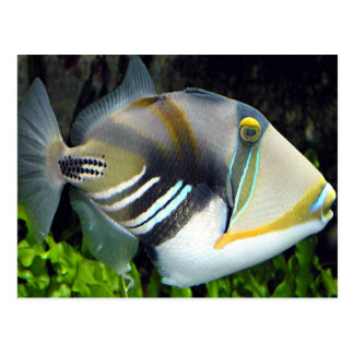 Hawaiian Tropical Fish Postcard