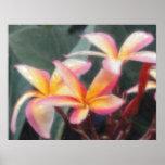 Hawaiian Tropical Plumeria Poster