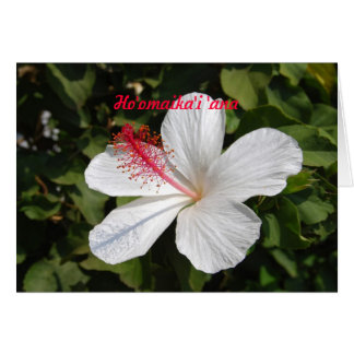 Hawaiian Wedding Congratulations White Hibiscus Card