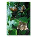 Hawaiian Woodrose Card