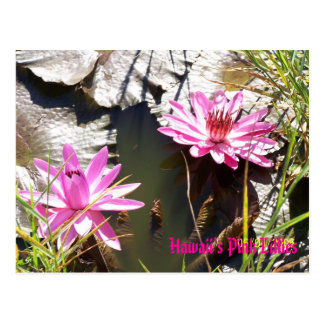 Hawaii's Pink Lillies Postcard