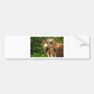 Hawk Eyes Bumper Stickers