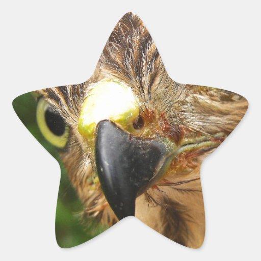 Hawk Eyes Star Sticker
