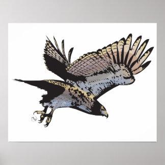Hawk Illustration Poster