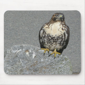 Hawk on a Rock Mousepad