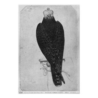 Hawk on hand poster