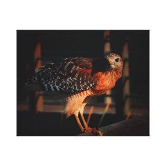 Hawk on Railing with Prey Canvas Print